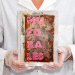 """Maja Szczypek, Mucorales - """"żywa"""" książka"""